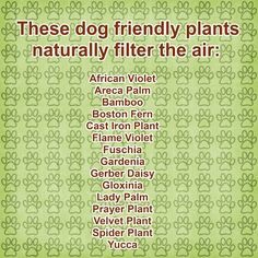 Toxic Plants and Dog Friendly Gardens – The Healthy Dog Blog